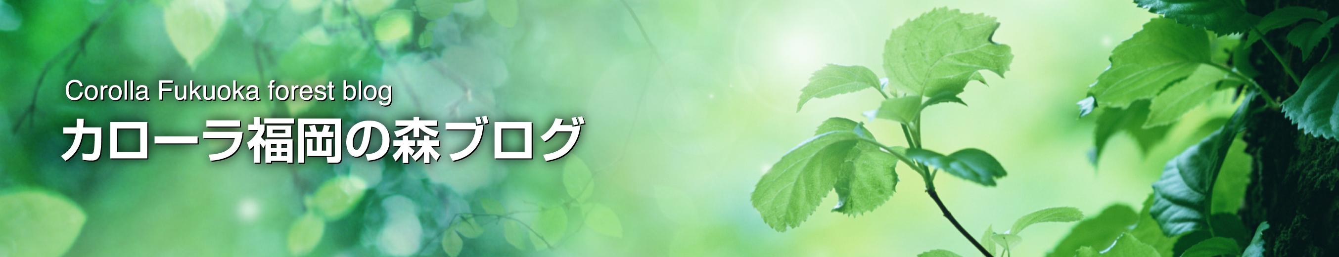 カローラ福岡の森ブログ